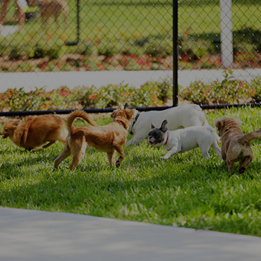 Large Dog Park at Enclave at Albany Park Apartments